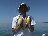 Jumbo Perch Lake Erie
