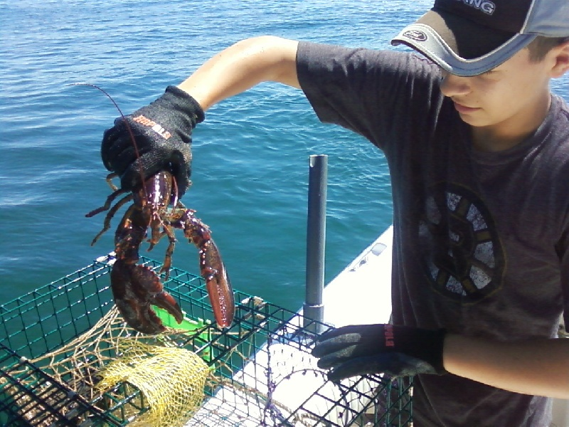 Lobsters from the Traps