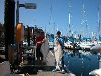 Bruce & Tom's Halibut