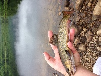 God's Country Brook Trout..