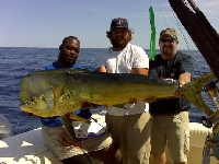 The Massachusetts State Record Mahi-Mahi caught by New England Patriot Ty Warren!!!