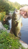 Bass 2 at the river