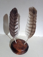 Red Tailed Hawk wing feather