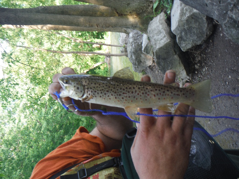 nice little trout from Canandaguia Outlet in Shortsville NY