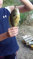 Bluegill and Bass?