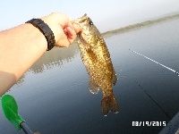 Quaboag Pond Smallmouth