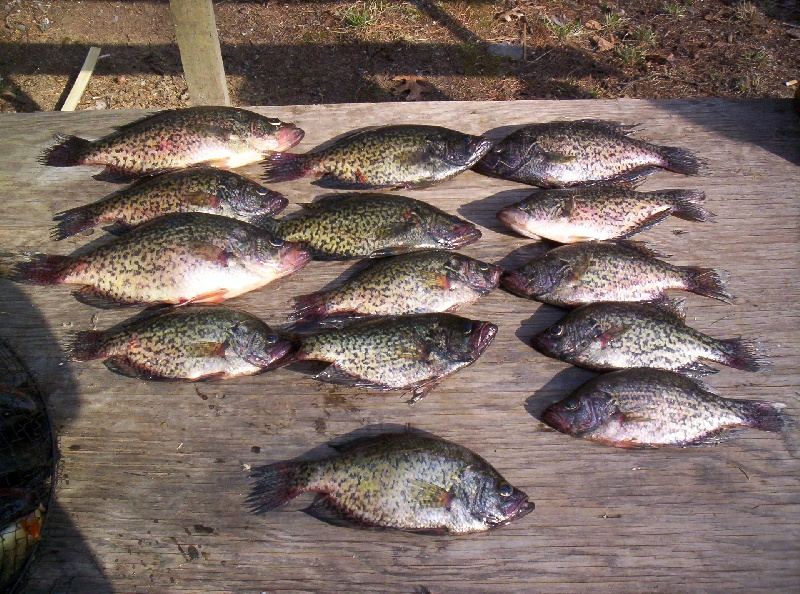 more crappies