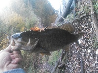 Westfield river smallmouth