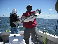 Sandy Hook Striped bass