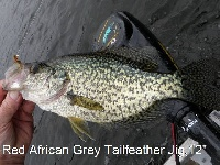 Sept Jig Black Crappie 12""