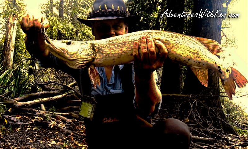 "Ken Beam catches 35"" Northern Pike fishing out of his kayak!"