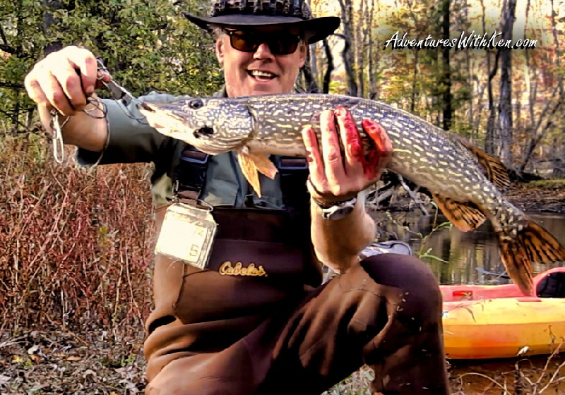Ken Beam was chasin` Pike on the Passaic River 10/26/2014