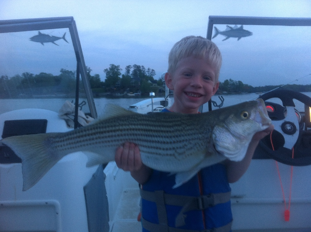 Lake Murray Striper