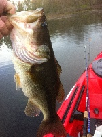 Hogan Pond 2lb