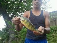 perch from lake hopatcong