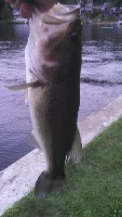 Sawyer Lake Bass