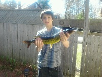 pickerel