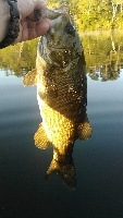 Friday morning Smallmouth!
