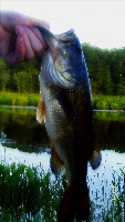 Brian's Lunker