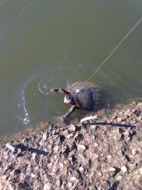 Turtle from 8/19 or 8/20