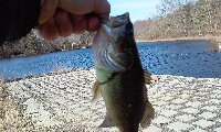 easter bass #1 pic 2