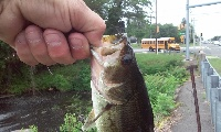 chunky but small bass