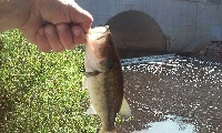 small bass harrisonville lake spillway
