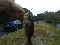 Nice bass today in the rain #1