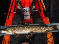 "8 Pounds/ 30"" Northern Pike"