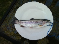 2nd trout of the year