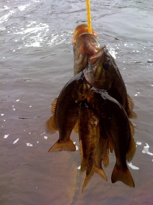 6 small mouth bass